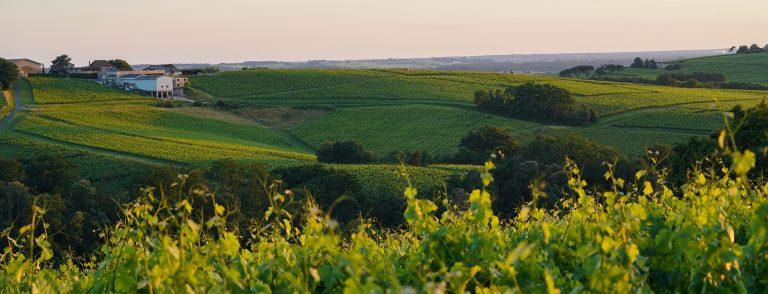 Les vins de Bordeaux & le développement durable