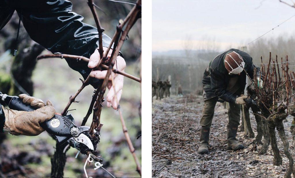 hiver vignes vigneron