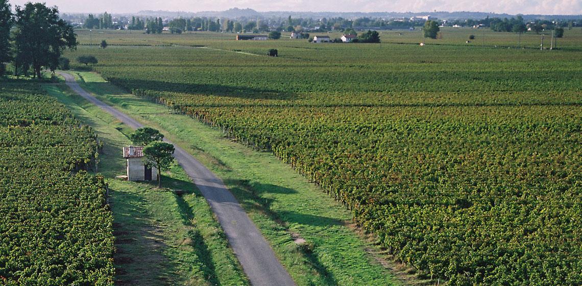 Bordeaux-Rose-5