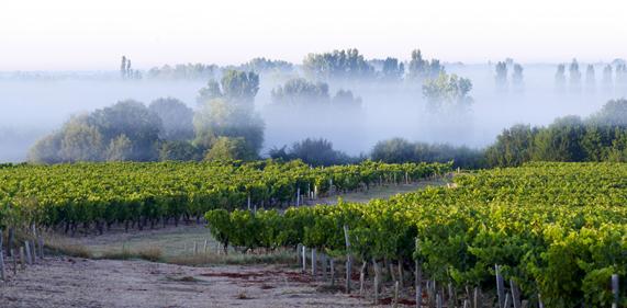 Bordeaux-Superieur-rouge-9