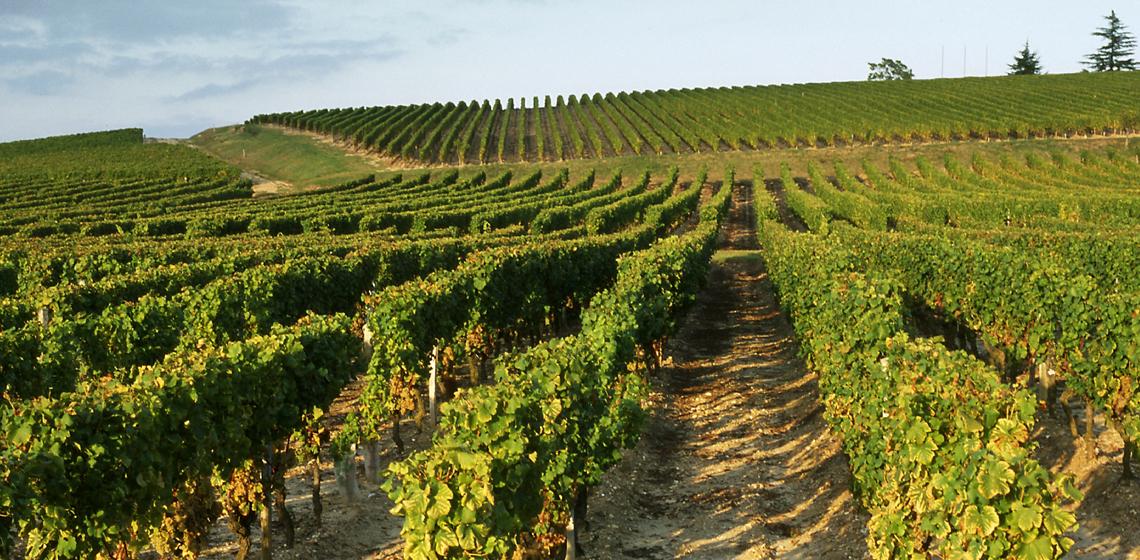 Bordeaux-blanc-sec-1