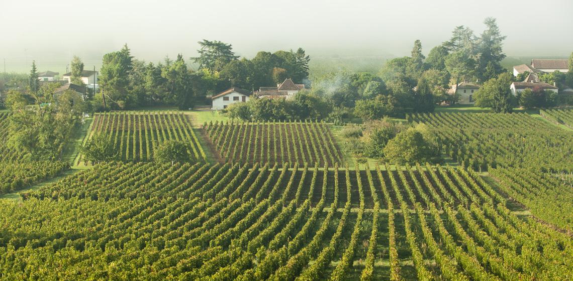 Castillon-Cotes-de-Bordeaux-3