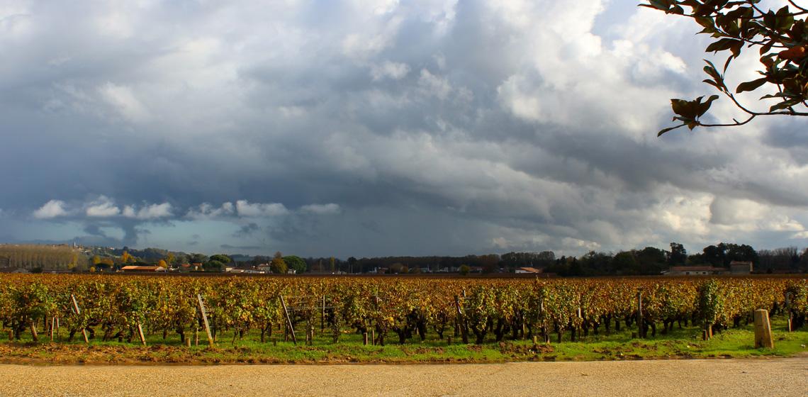 Francs-Cotes-de-Bordeaux-blanc-sec-9