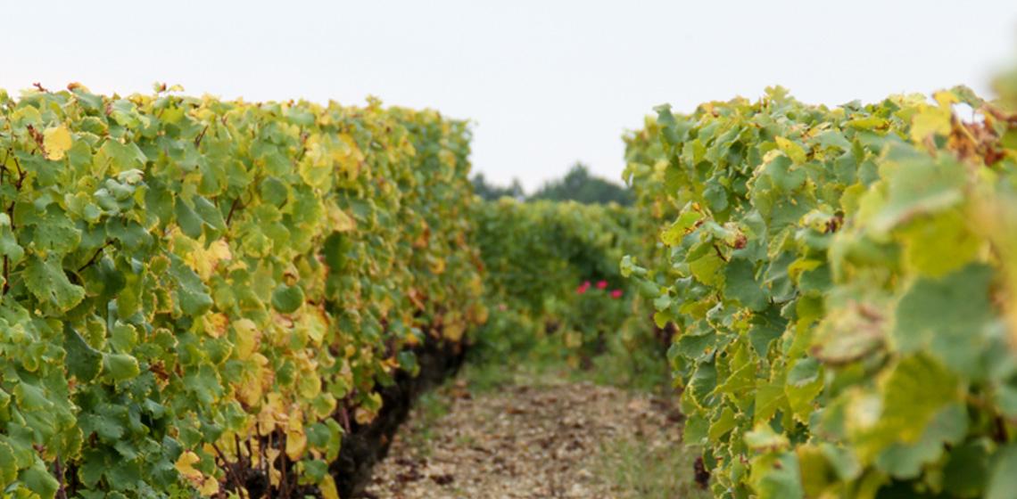 Francs-Cotes-de-Bordeaux-rouge-1