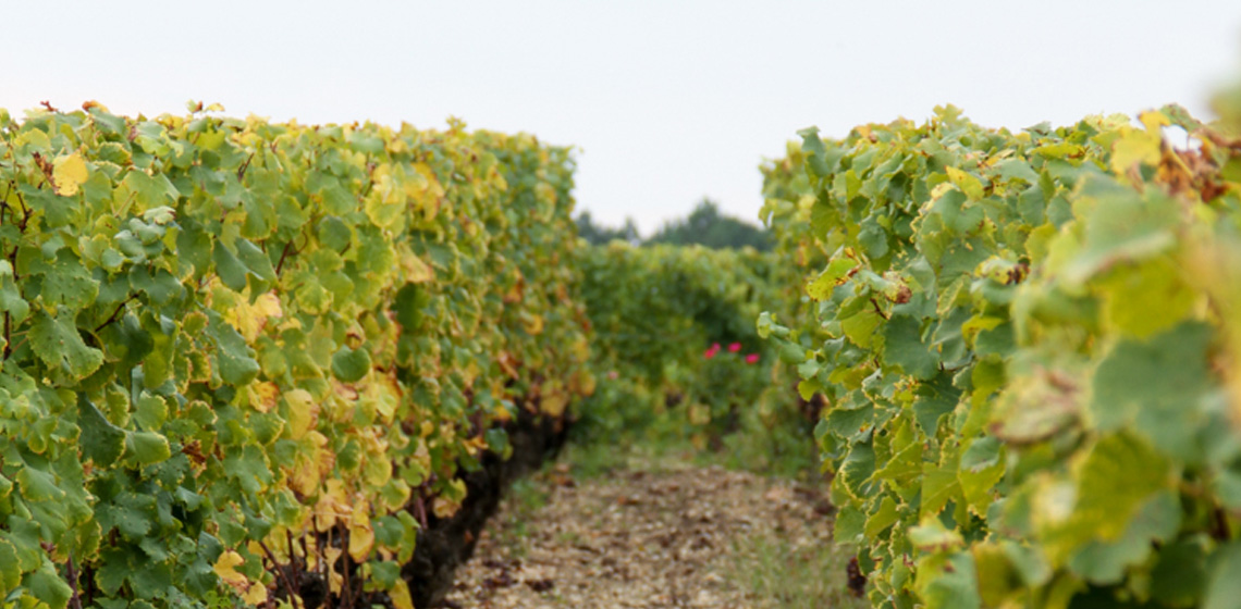 Francs-Cotes-de-Bordeaux-rouge-5