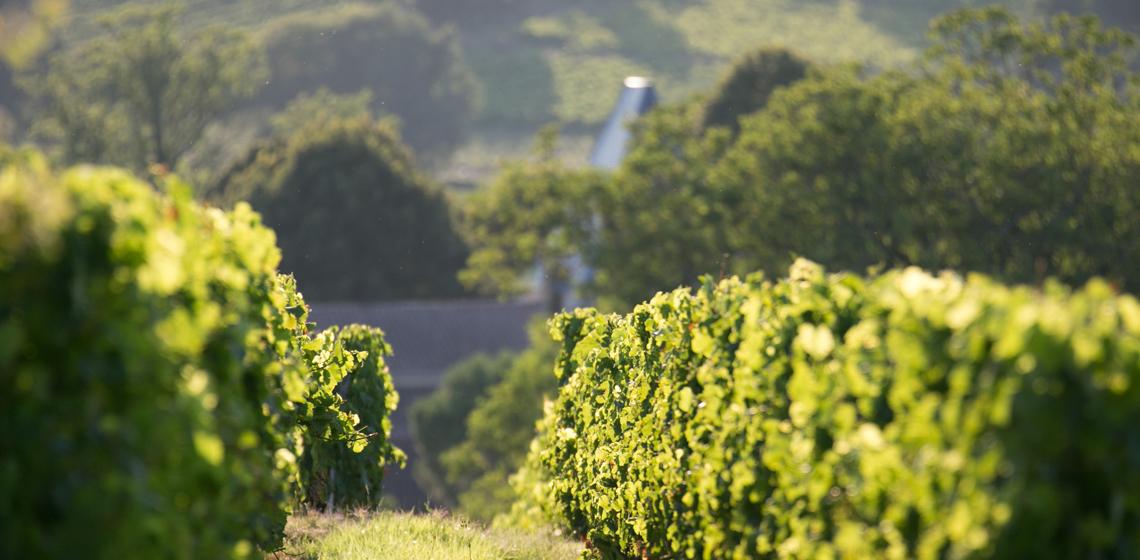 Sainte-Foy-Cotes-de-Bordeaux-blanc-sec-1