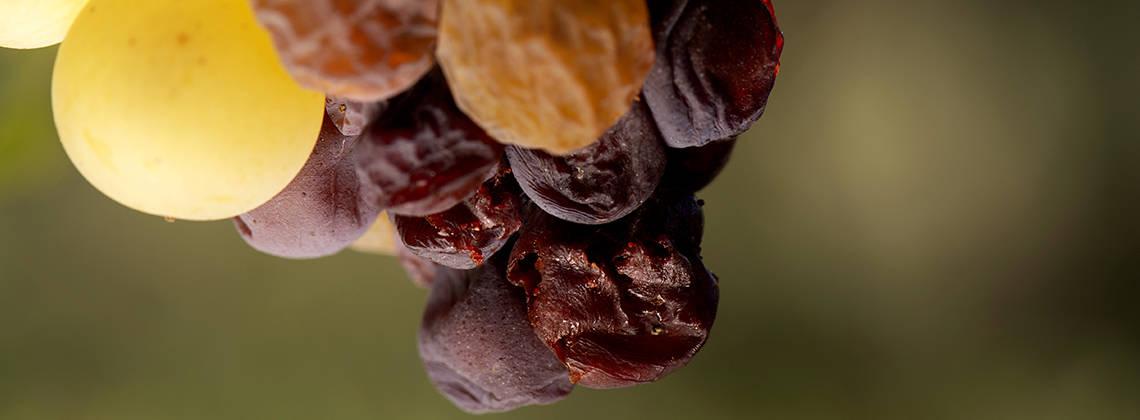 Zoete wijnen uit Bordeaux!