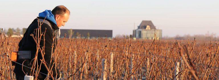 En direct des vignes : le délicat travail de la taille…