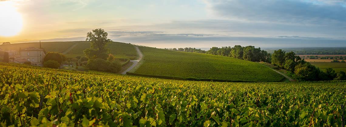 Bordeaux goes green