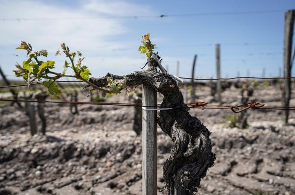 vineyard space