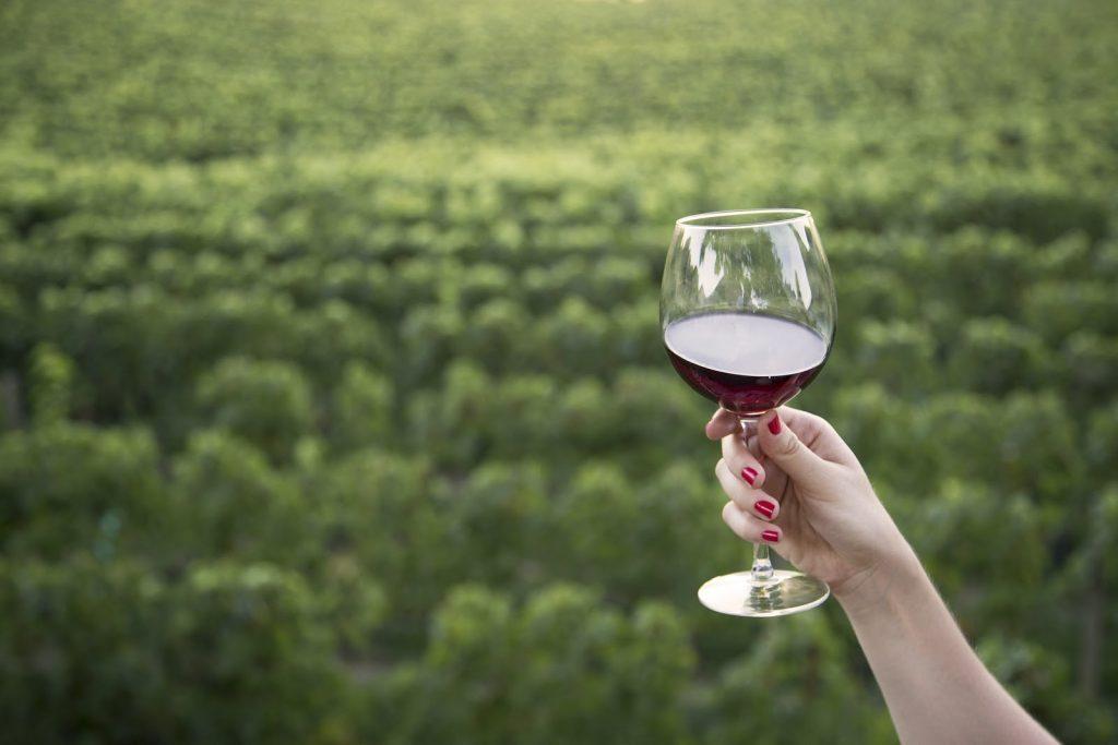 pomerol saint émilion vin rouge