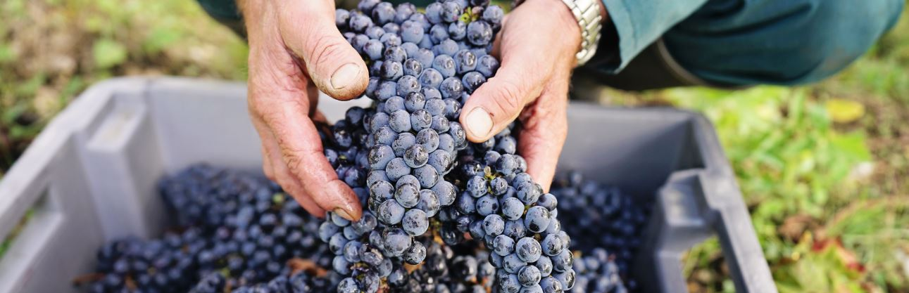 Bordeaux – Rotweine ganz nach deutschem Geschmack