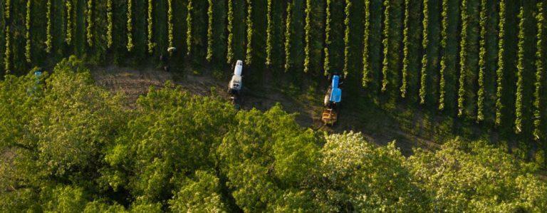 Innovative Technologie im Weinberg