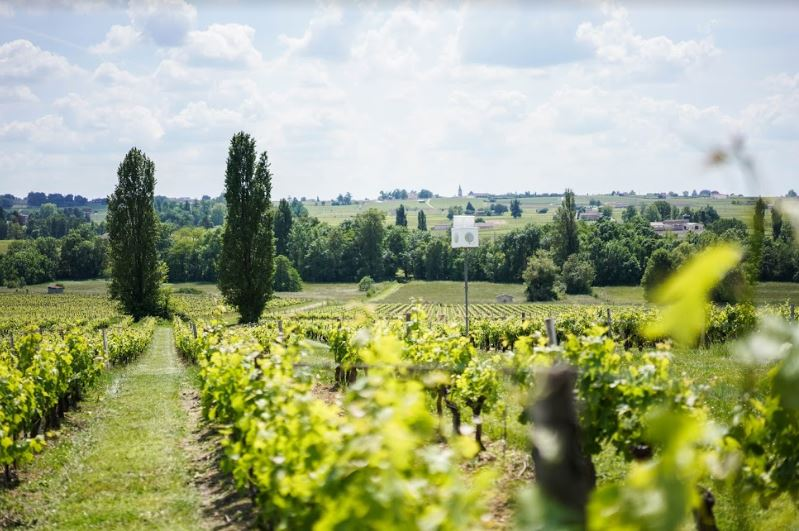 technology in vineyard