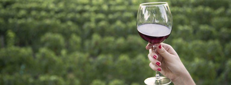 Discover Bordeaux Supérieur
