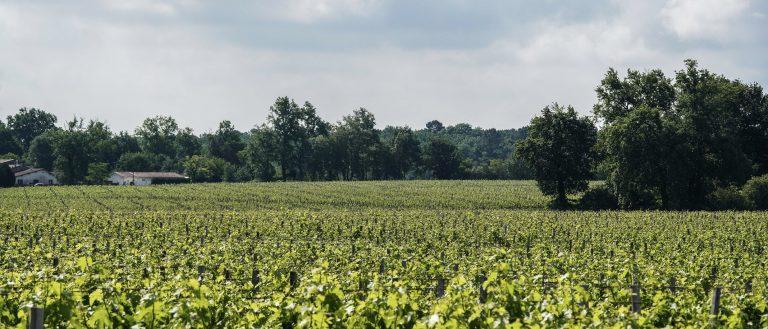 Voyage dans la région des Graves et Sauternes, la « rive gauche » de Bordeaux