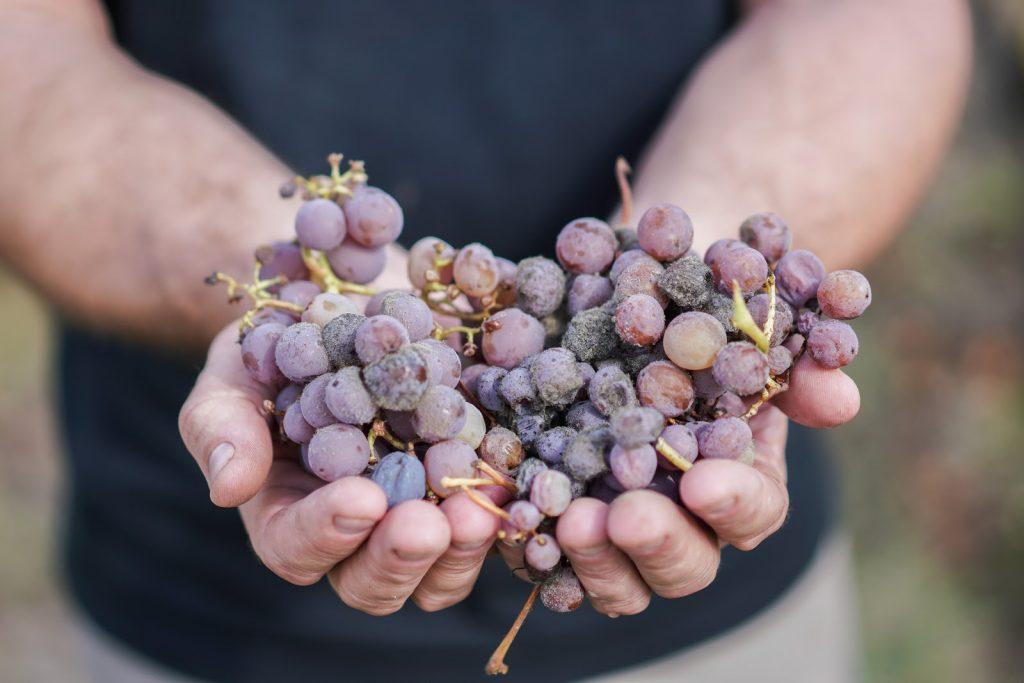 sweet bordeaux wine