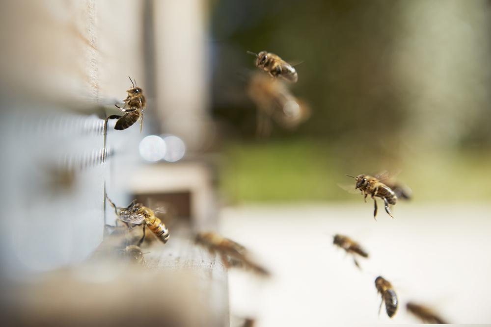 abeille nature animal