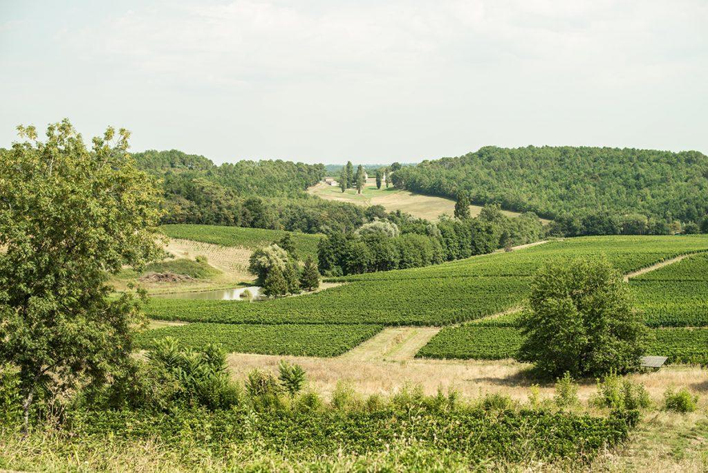 vignoble vert vin