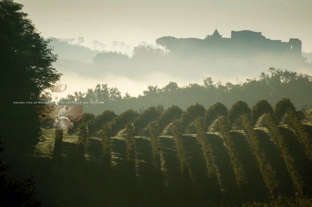 wijngaard tour de mirambeau