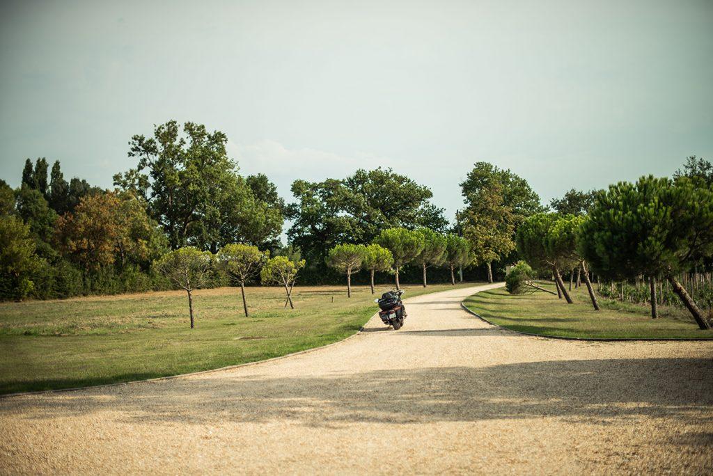 wijngaard moto bomen dreef