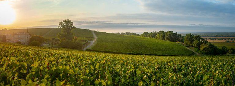 Britons in Bordeaux vineyards