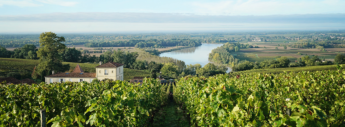 Climate Change: how the Bordeaux vineyards are planning ahead