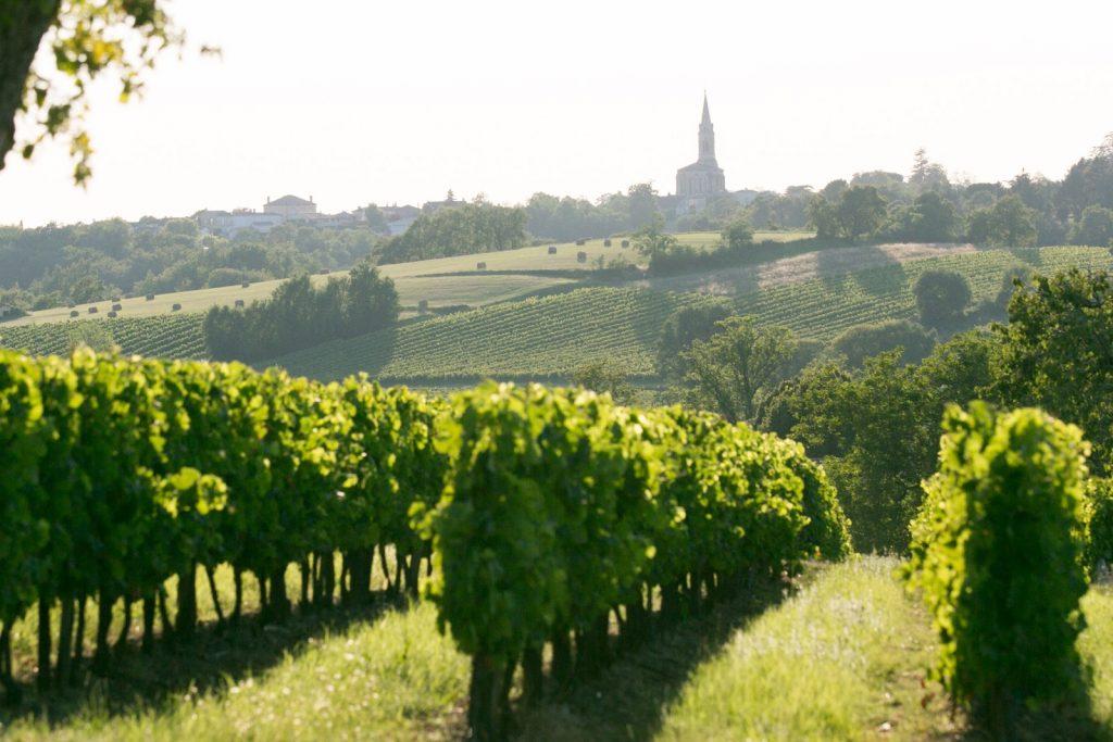 vignoble château raisins
