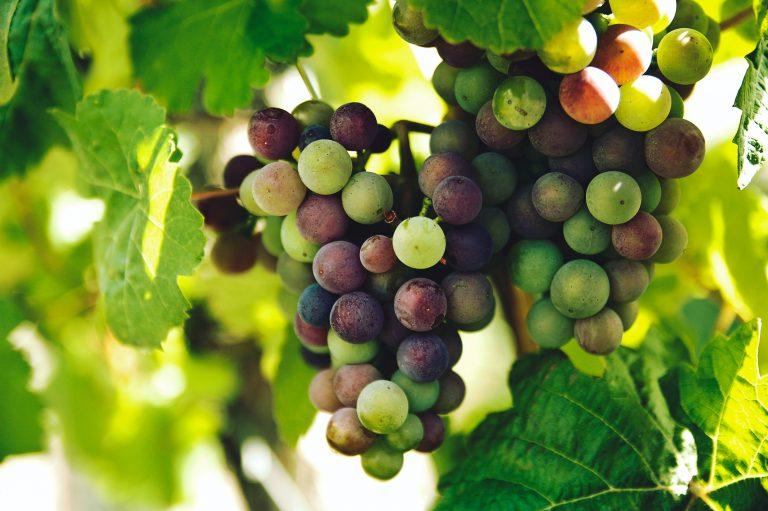 Bordeaux – Zeitgeist & Tradition
