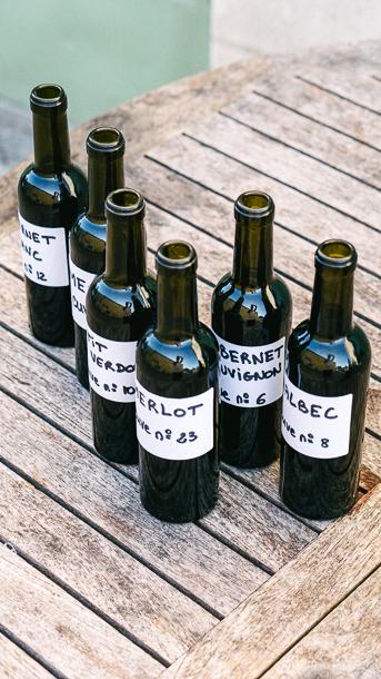 cepage wine bordeaux vines