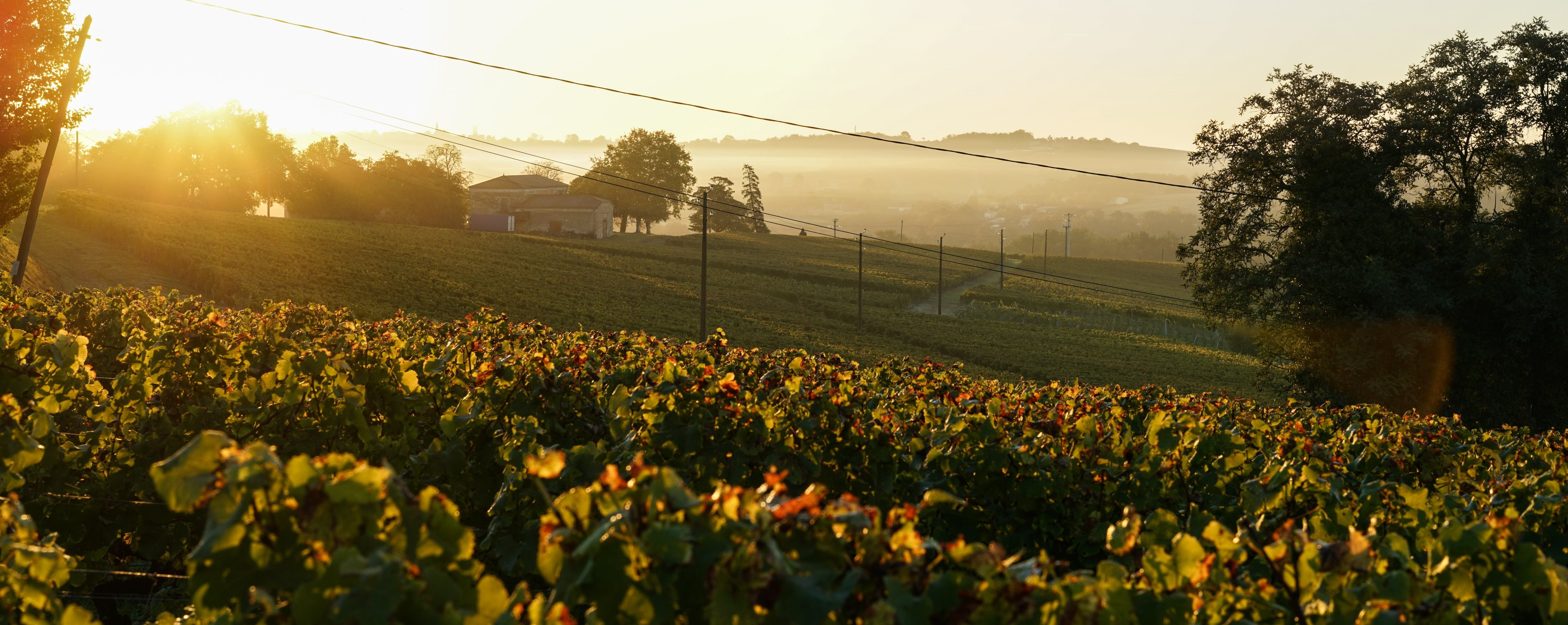 Get the latest figures from Bordeaux at our virtual trade briefing