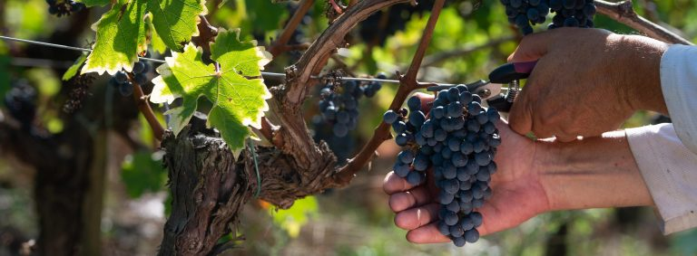 2020 Vintage. What are the 2020 Bordeaux wines like? We reveal all!