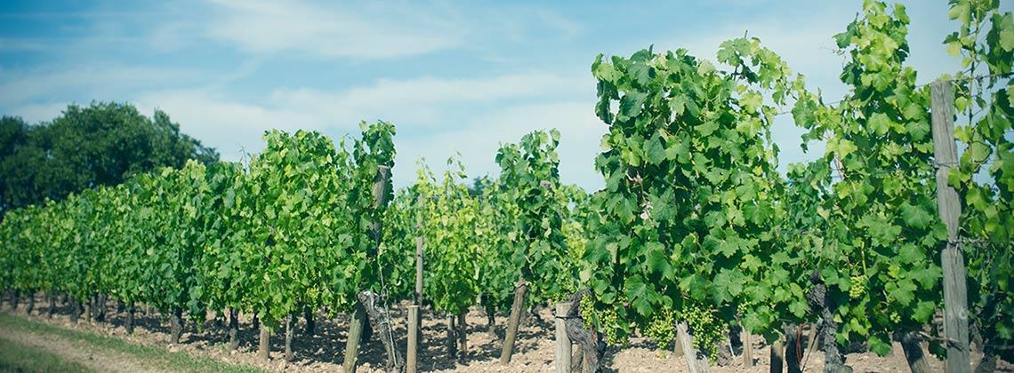 Bio und Bordeaux – Der Stand der Dinge