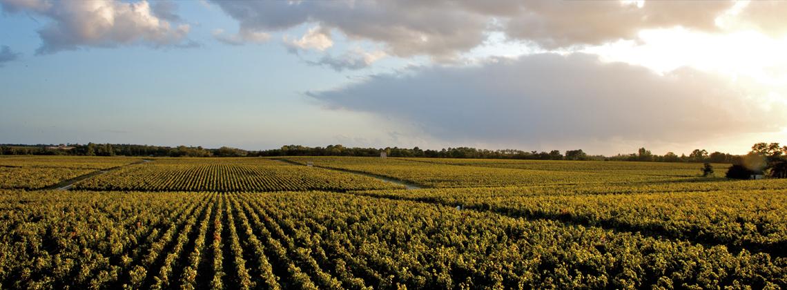 Bordeaux überraschend anders – moderne Rotweine zeigen ihr ganzes Können