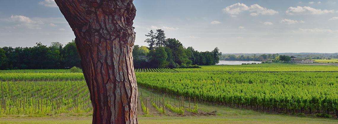 Umweltschutz im Weinbau – Autonom und umweltfreundlich wirtschaften