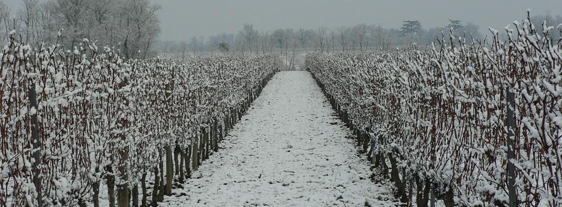 Hinter den Kulissen – Bordeaux zur Weihnachtszeit