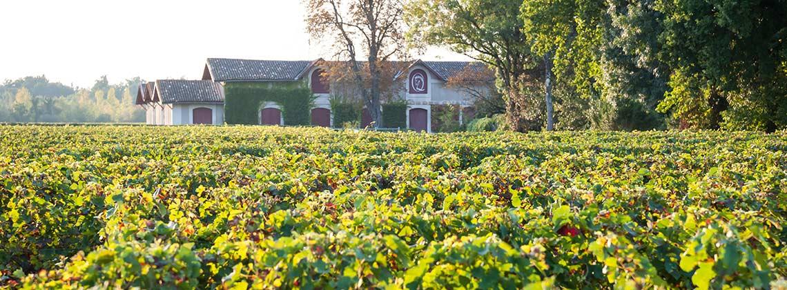 Château Cheval Quancard und der Umweltschutz im Weinanbau