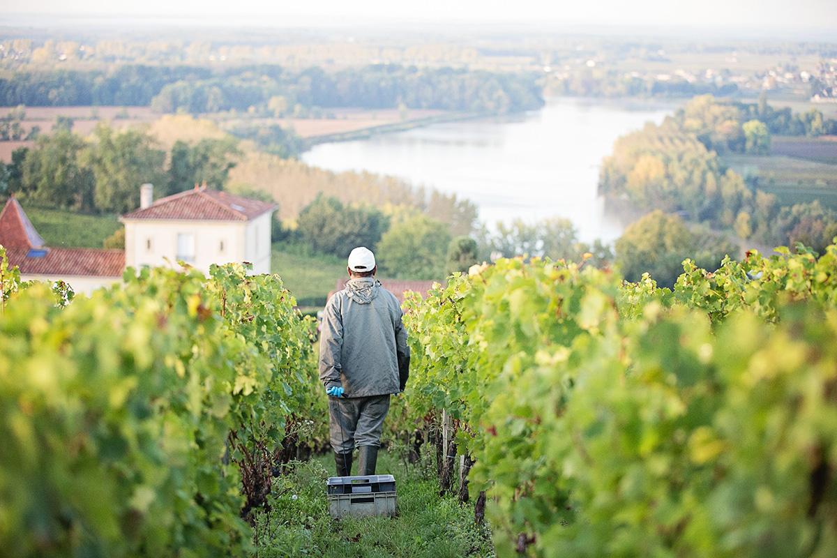 Nur alle 25 Jahre – warum 2017 kein einfacher Jahrgang für Bordeaux ist