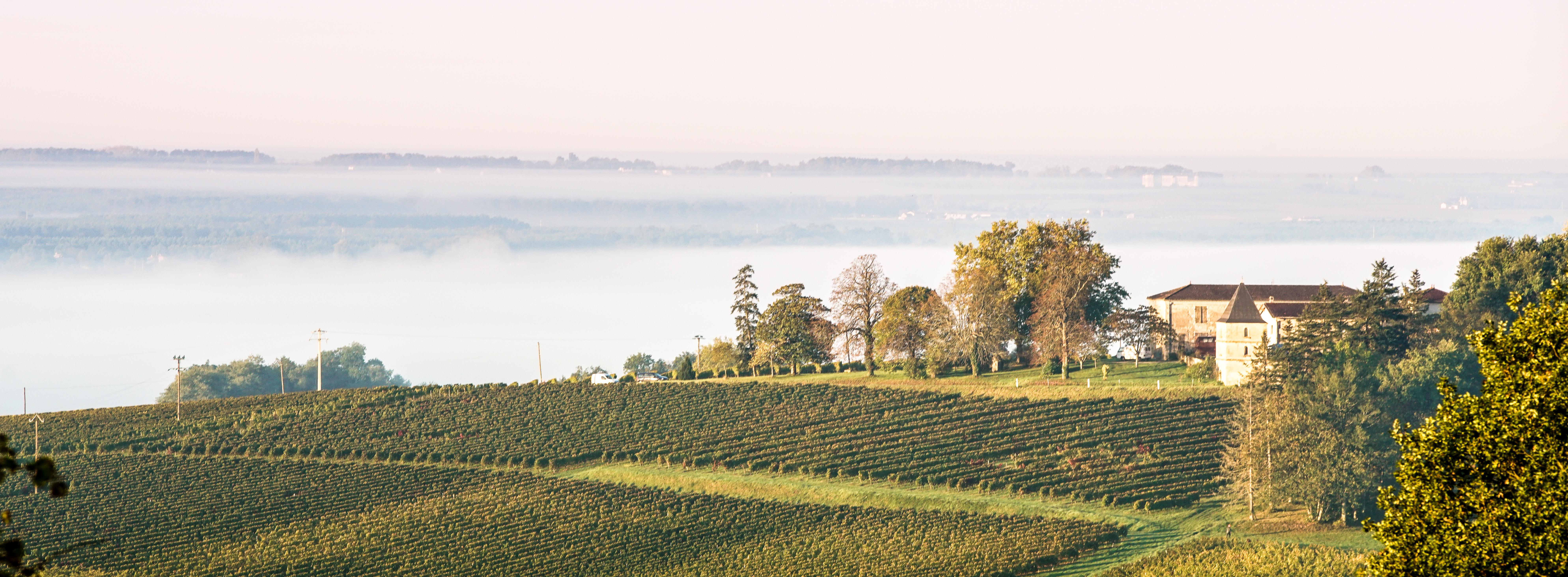 La facette bio de Bordeaux