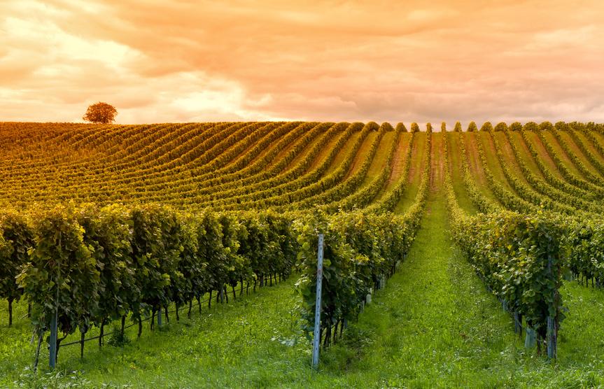 Oenotourisme au coeur des vignobles bordelais