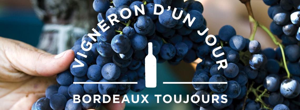 Vigneron d'un jour, Bordeaux toujours