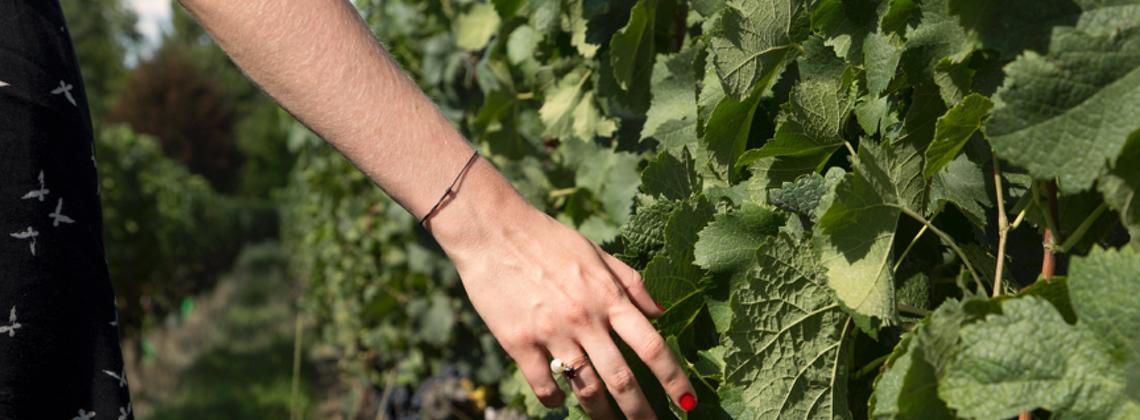 Zussen in het hartje van de wijngaarden