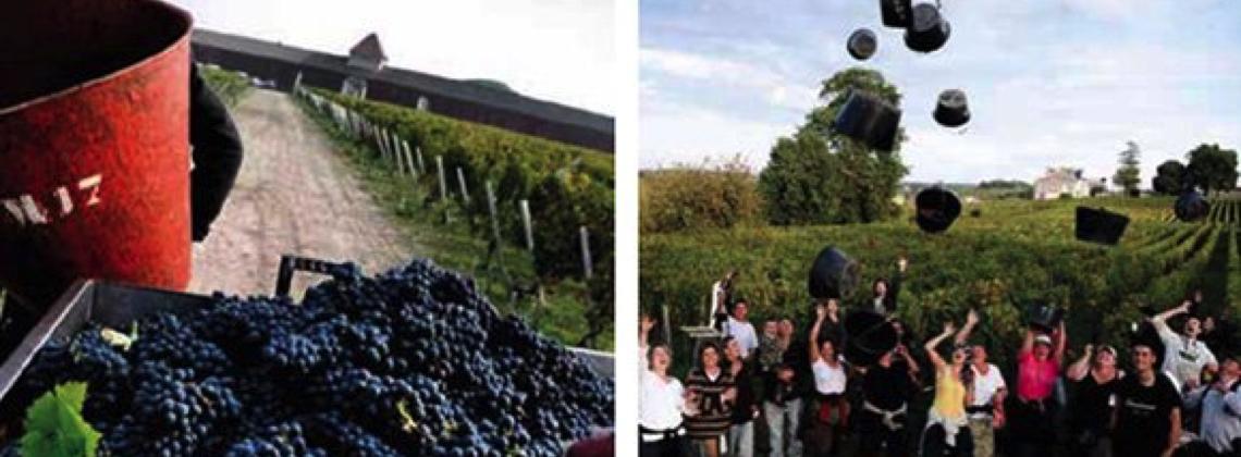 Bordeaux Harvest 2015