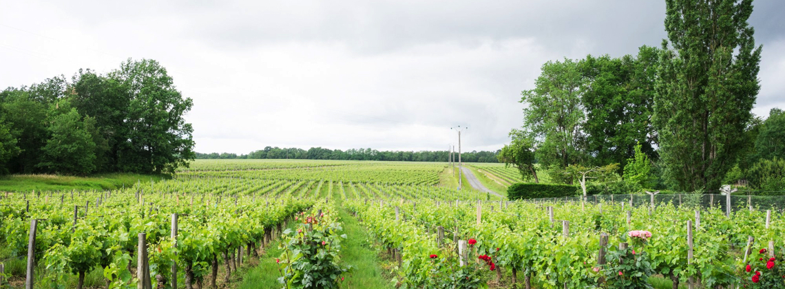 Carbon Footprint Conscious winemaking in Bordeaux