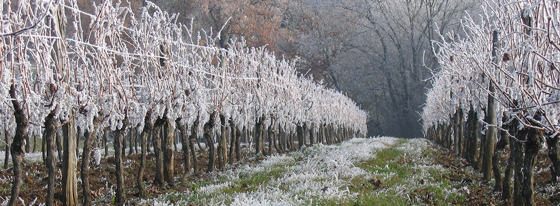 What happens to Bordeaux's vineyards in winter?