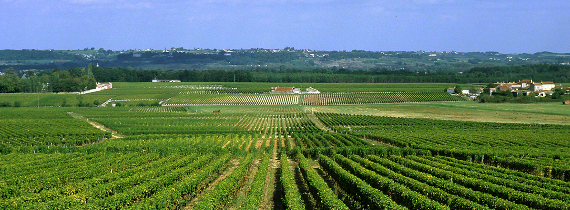 7 Things To Know About Côtes de Bourg