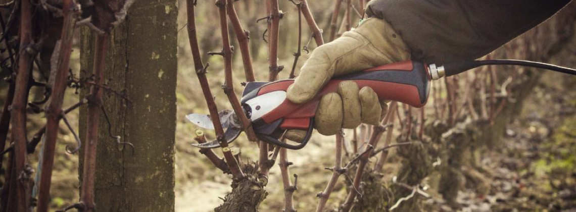 Scenes From The Vineyard Winter Edition: Why We Prune