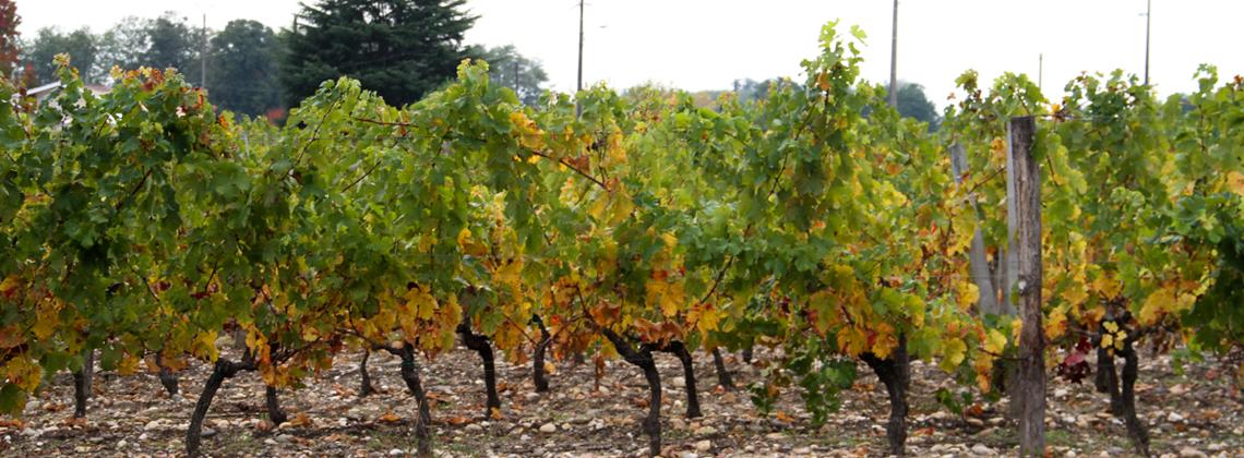 Bordeaux d'automne : déroulez le tapis rouge !