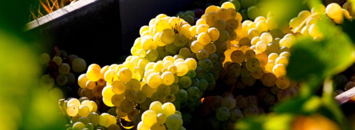 Bordeaux blancs secs et rosés : bienvenue au millésime 2015 !