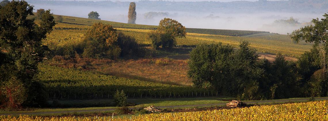 Portraits de viticulteurs : une histoire de génération en génération